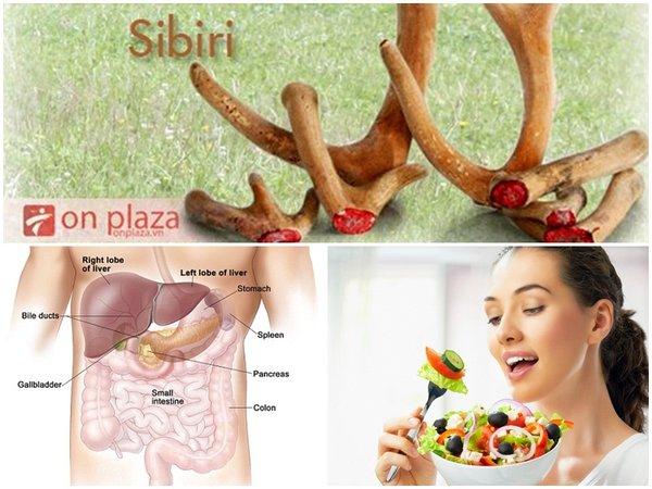 Nhung hươu giúp cải thiện hệ tiêu hóa và hấp thu dinh dưỡng
