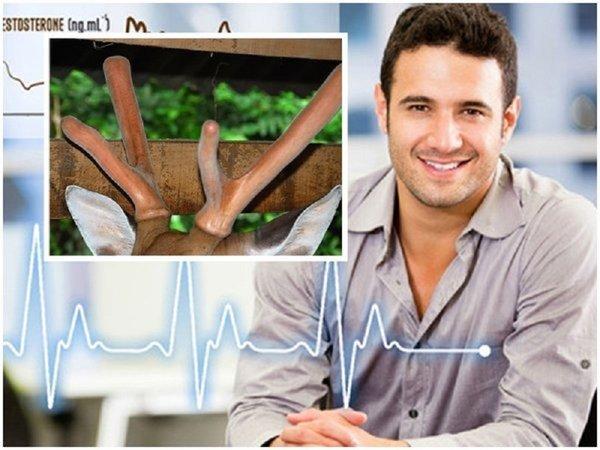 Hiệu quả sử dụng nhung hươu tươi cho người bị tim mạch